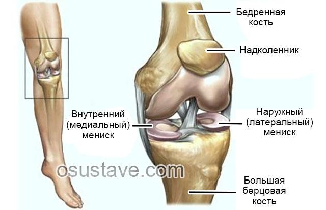 Медиальный мениск коленного сустава