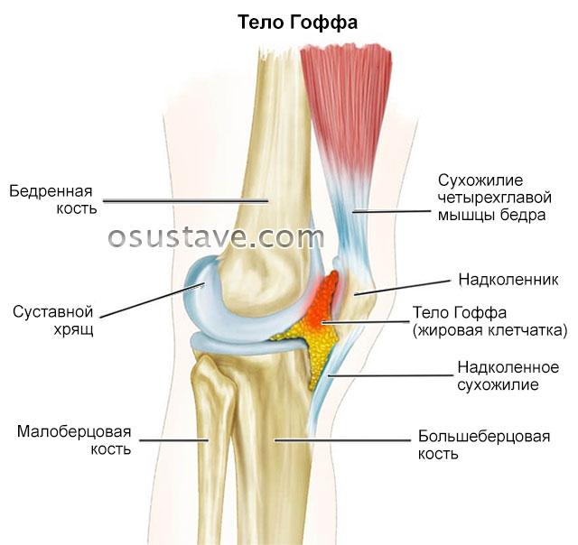 жировая клетчатка коленного сустава