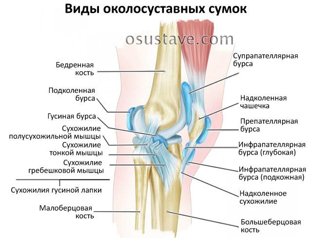 бурсы коленного сустава