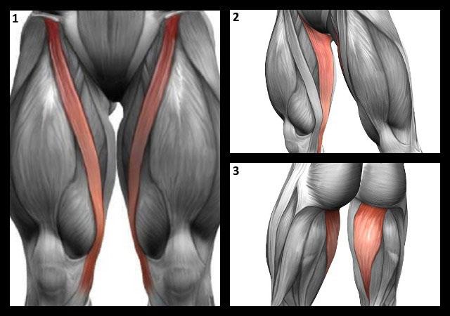 портняжная, стройная, полусухожильная мышцы