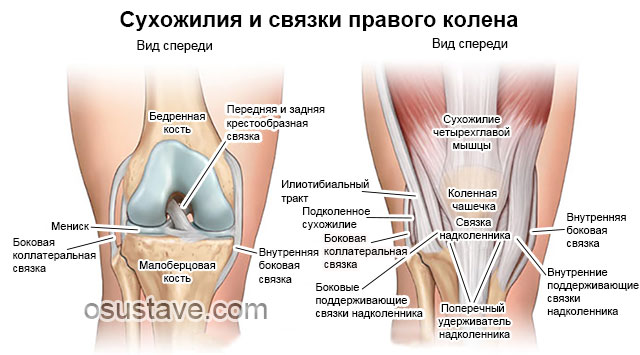 связки и сухожилия правого колена