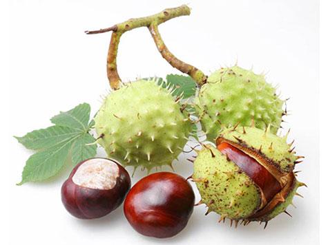 плоды каштанов