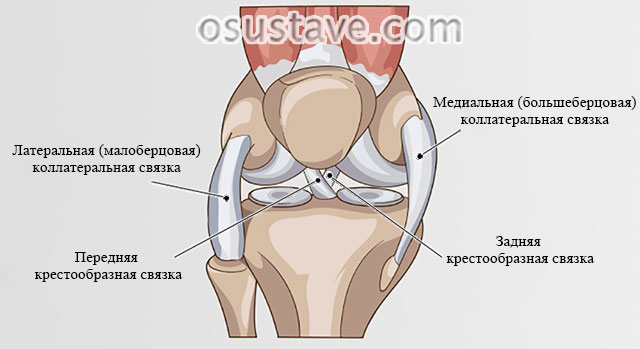 Разрыв связки в коленном суставе симптомы thumbnail