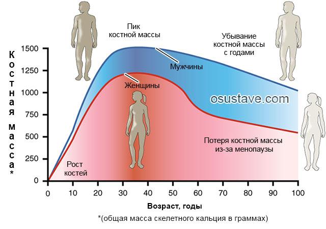 график зависимости костной массы от пола возраста