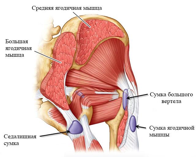 локализация сумок тазобедренного сустава
