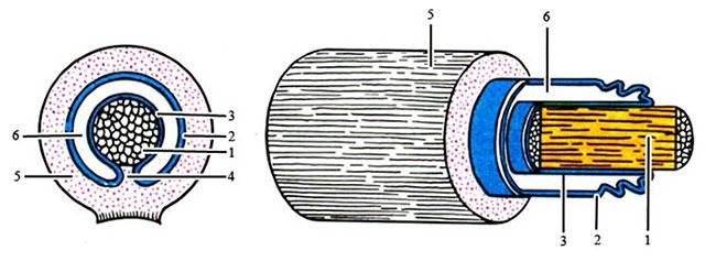 схема строения синовиального влагалища