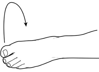 вращения стопами лежа на спине