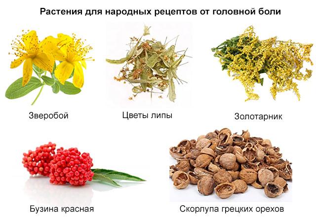 растения для народных рецептов от головной боли