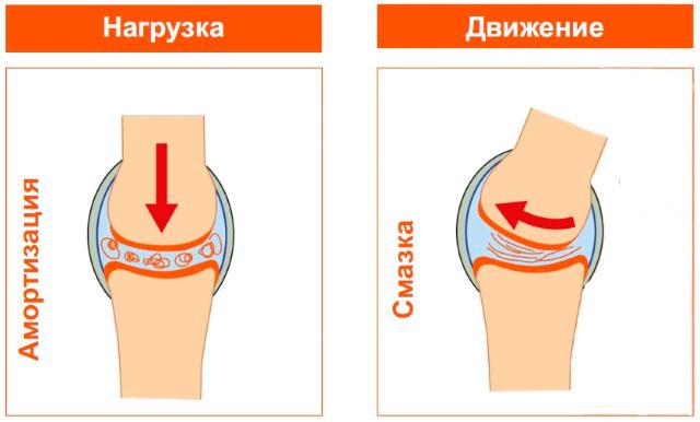 Что полезно для коленных суставов