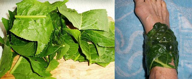 листья хрена и компресс из них
